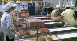 Giấy chứng nhận VSATTP cơ sở đủ điều kiện sơ chế, đóng gói trứng và các sản phẩm từ trứng