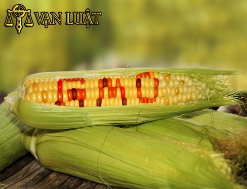 giấy chứng nhận vsattp cơ sở đủ điều kiện sản xuất thực phẩm biến đổi gen