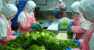 Giấy chứng nhận VSATTP cơ sở đủ điều kiện sơ chế đóng gói rau củ quả và sản phẩm rau củ quả,